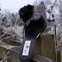 >Feather Mule Shoe Thumbnail 3